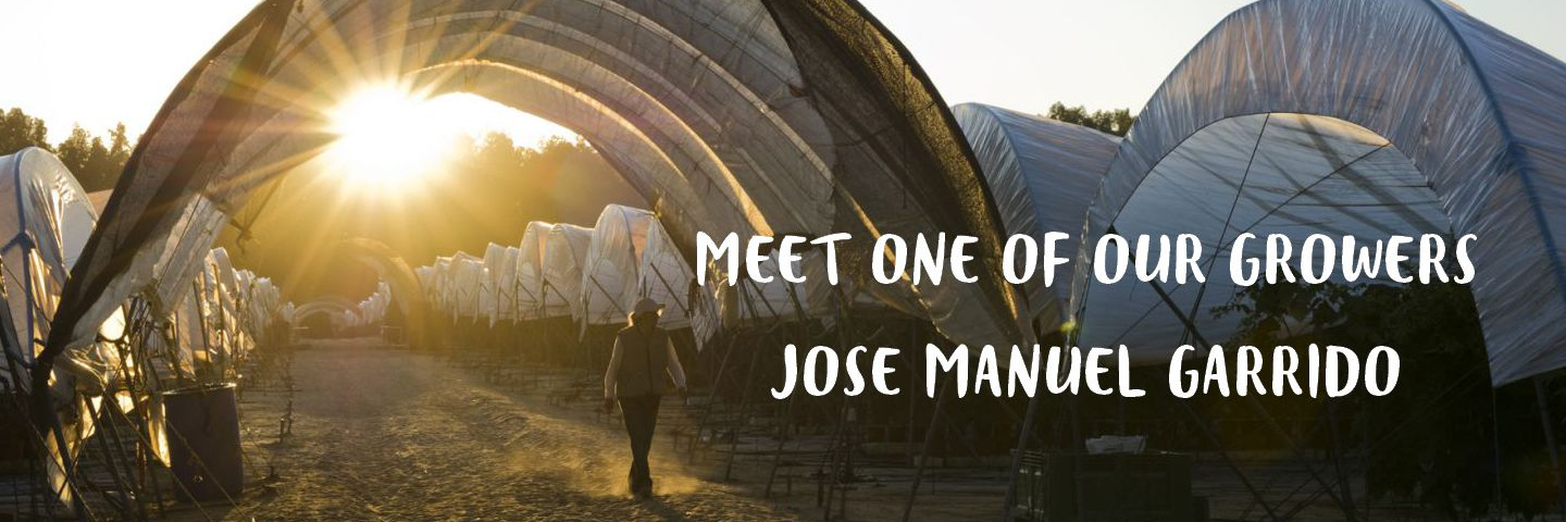 Meet our grower José Manuel Garrido