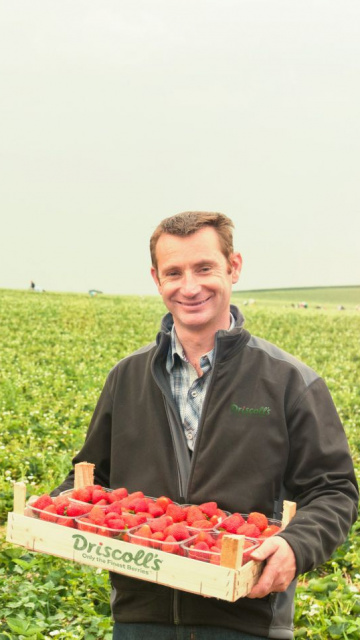 How we grow strawberries with the best growers